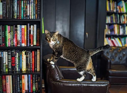 brooklyn-cats-shop-cats-of-brooklyn-community-bookstore-1